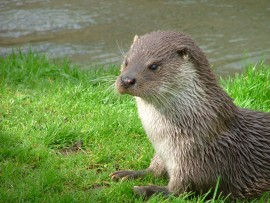 water meadows otter