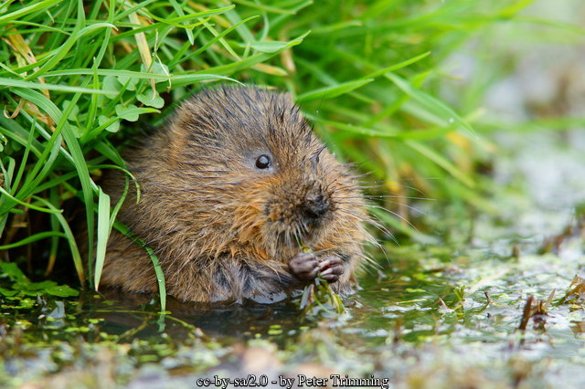 water meadow wildlife