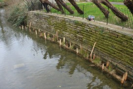River restoration project at Abbey Gardens March 17 (28)